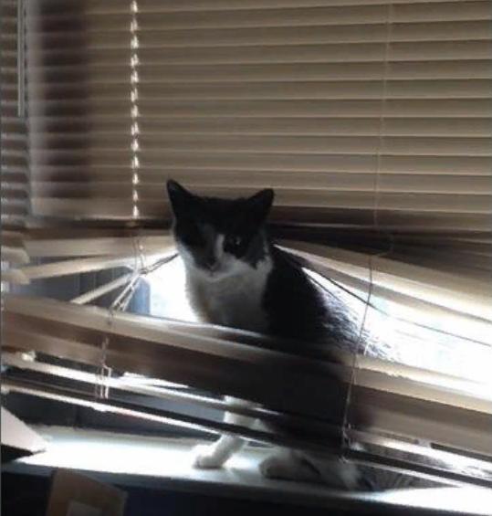 11 котов, которые выбрали для отдыха и игр очень странное место